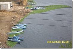 رياح من فرع رشيد يفصل القرية عن محافظة البحيرة